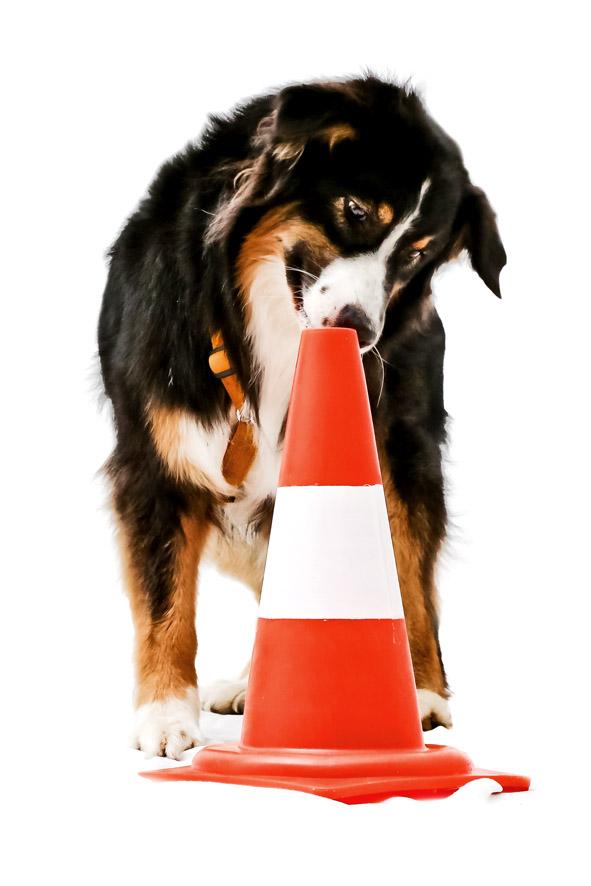 consulenza comportamentale per cane bergamo