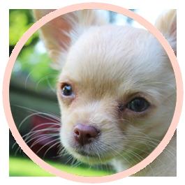 corso cuccioli puppy class