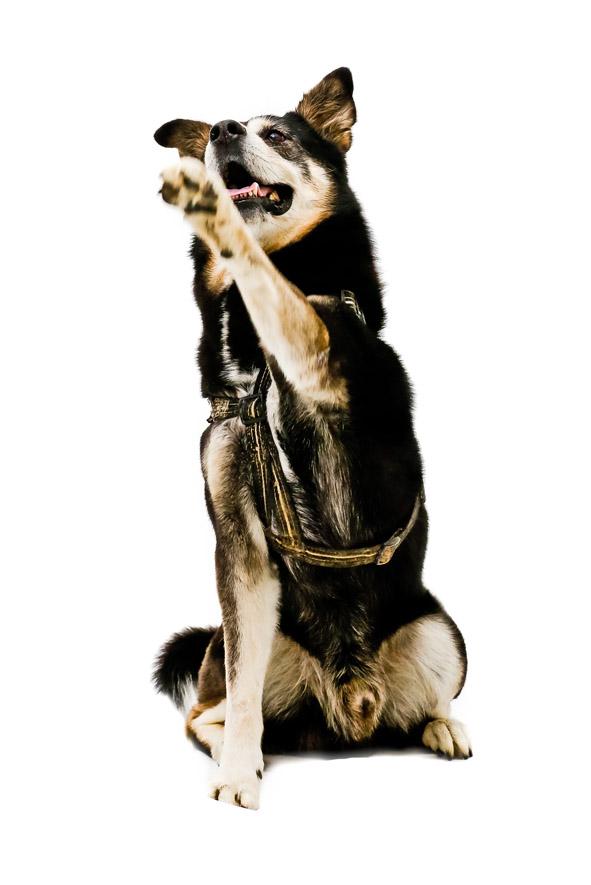 addestramento cane metodo cognitivo zooantropologico