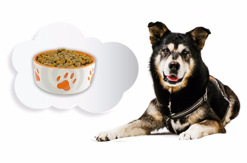 Come organizzare il momento della pappa per il tuo cane